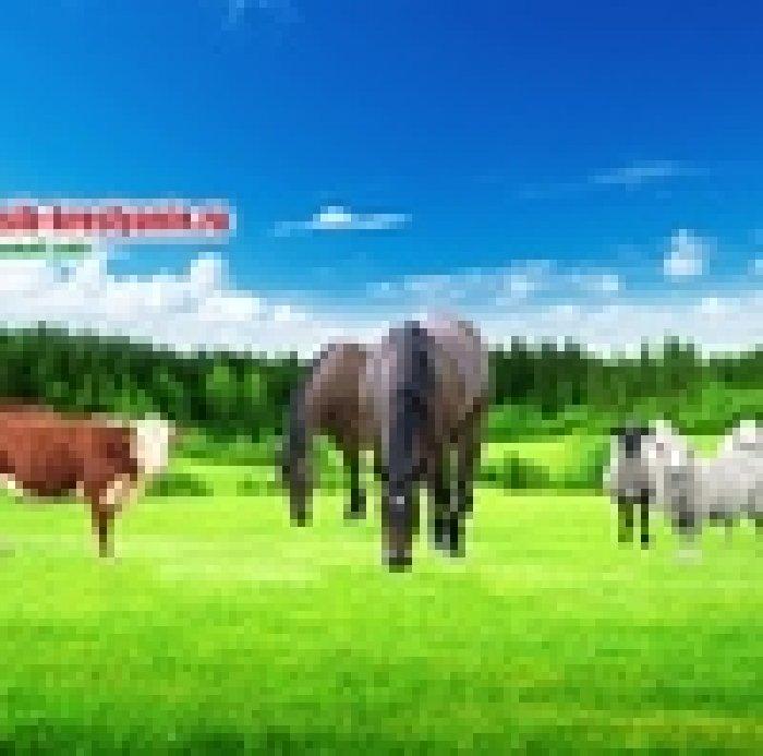 поселяются организме мк сибирский крестьянин сайт строго соблюдать правила